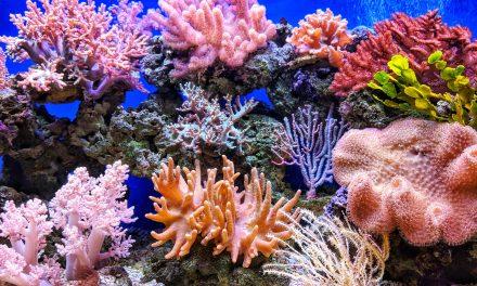 Nagyon dolgoznak a korallzátonyok megmentésén, ez lehet az egyik lépés