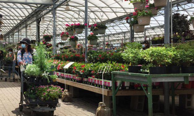 Mi lesz így a kertekkel? – nemsokára egekbe szökik a növények ára