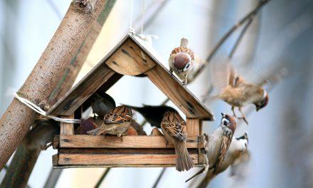 6 tipp, amivel elérheted, hogy több madár látogassa az etetődet idén ősszel